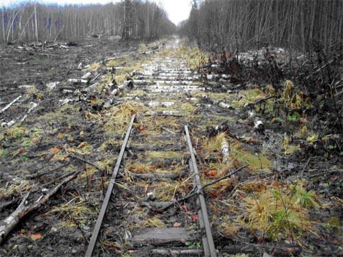 Отчет о пешем походе 1кс по Костромской области